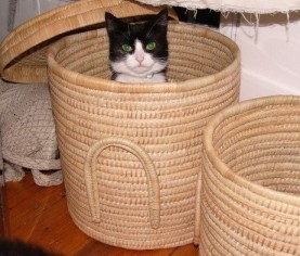 This is my cat sitting in a basket. The basket is from Malawi... so I figured its sort of tangentially linked to the theme of this post...